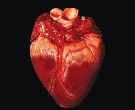 Too many heavy hearts