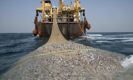 Over fishing along West Africa coast : The Afrika Super Trawler near Maurirania